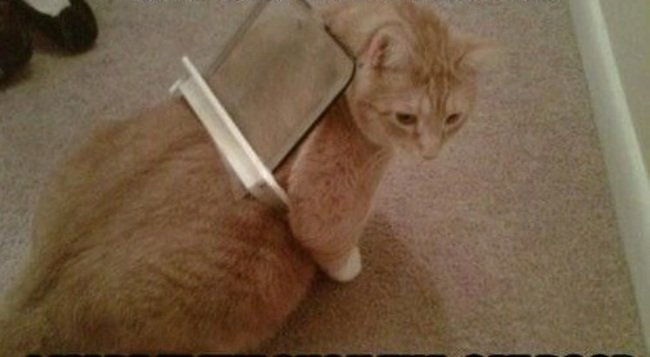 gato atrapado en un plastico