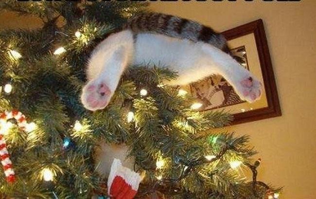 gato atrapado en un arbol