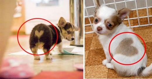animales con marcas en el cuerpo