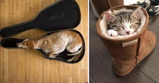 animales cansados durmiendo en lugares extraños
