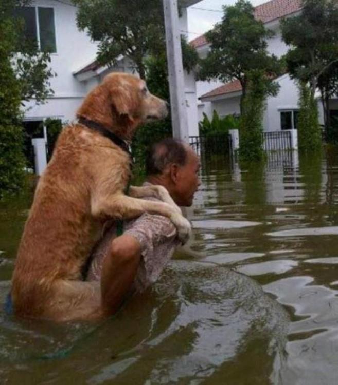 rescatando a su perro
