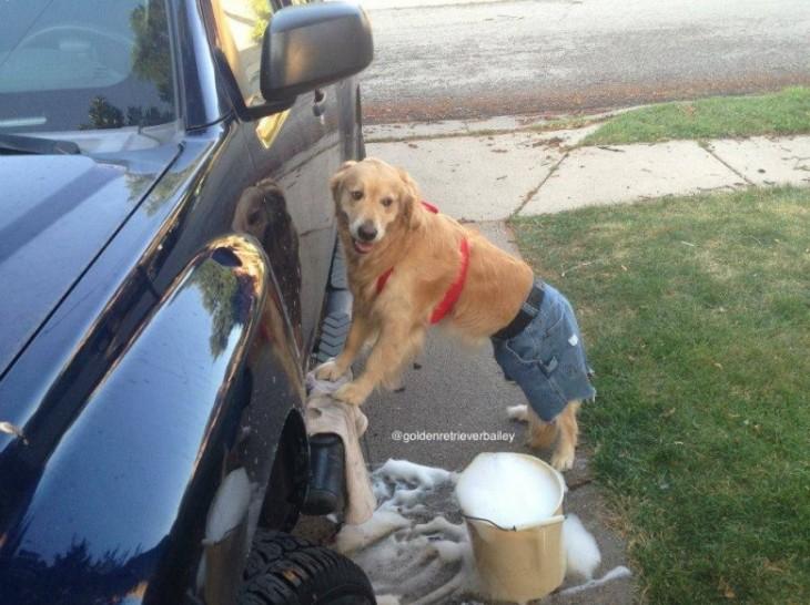 lavando camioneta