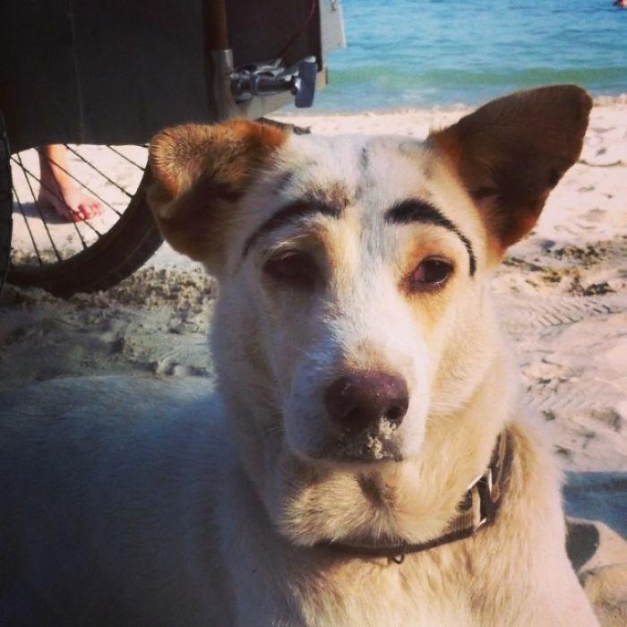 perro con cejas