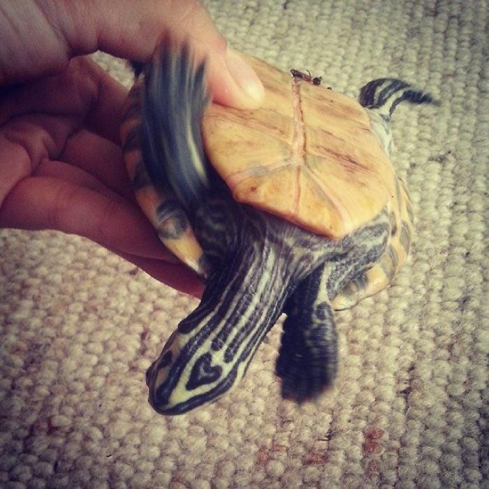 tortuga con un corazon