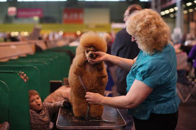 señora y perro con el cabello de mota