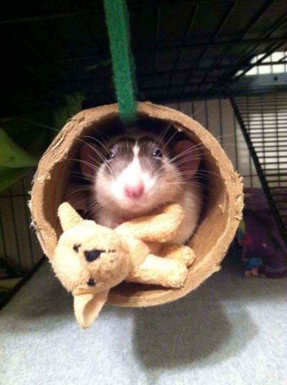 hamster con osito