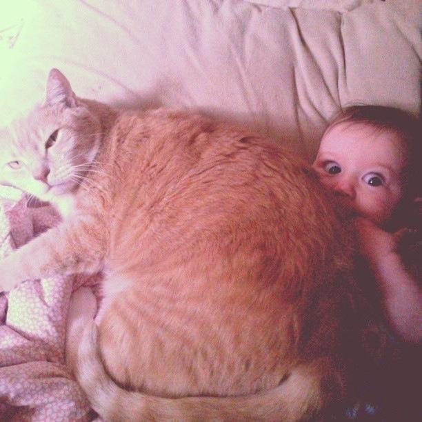 gato aplastando a niño