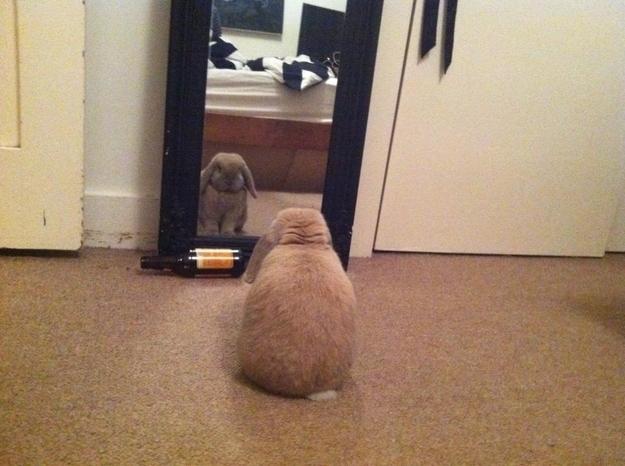 perrito viendose en el espejo