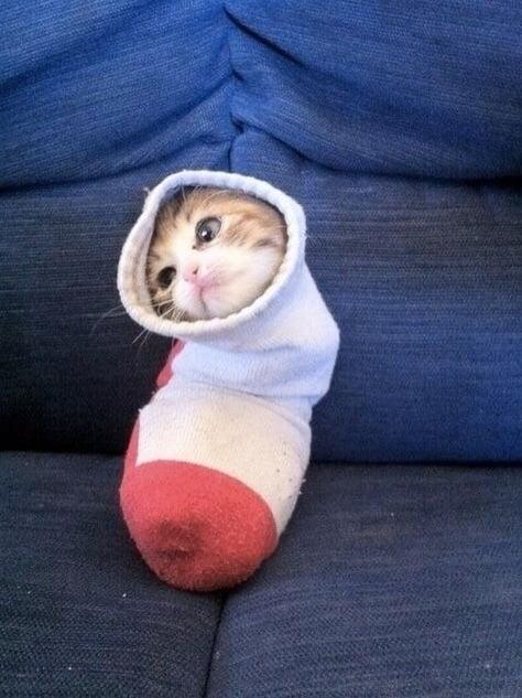 gatito en un calcetin
