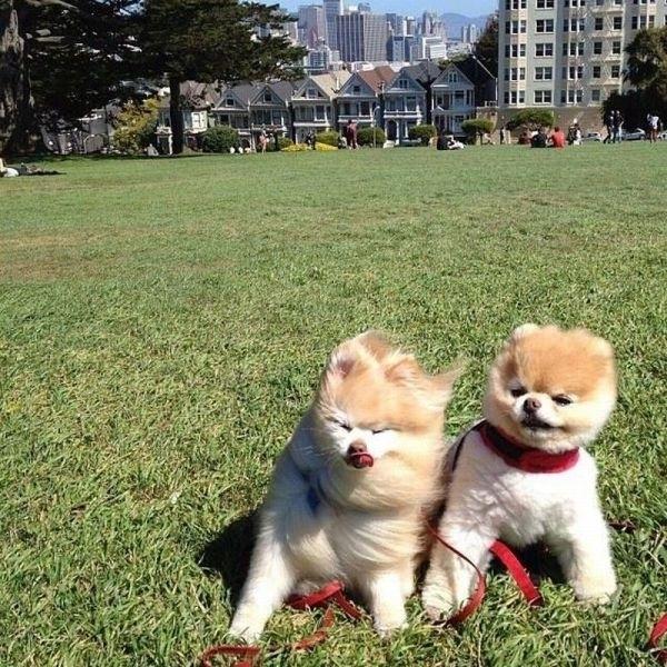perritos en un jardin