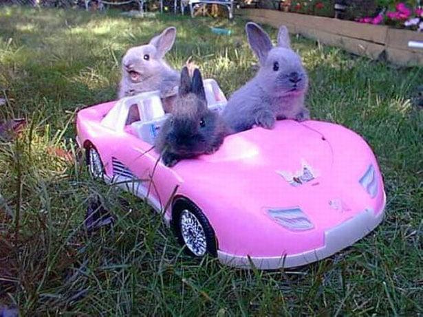 conejos en carrito rosa