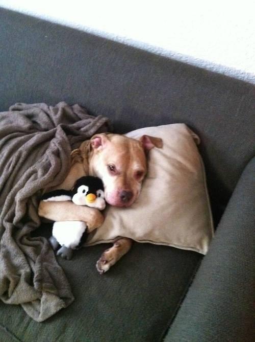 perrito abrazando pingüno