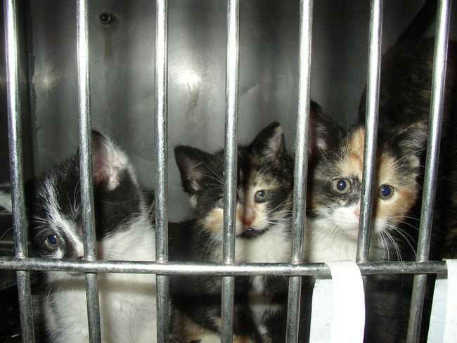 gatos encerrados