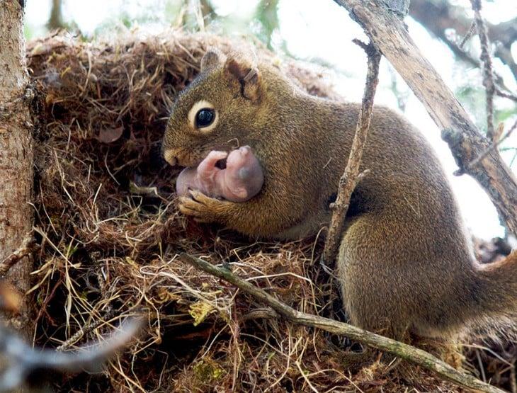 madre ardilla con su cria