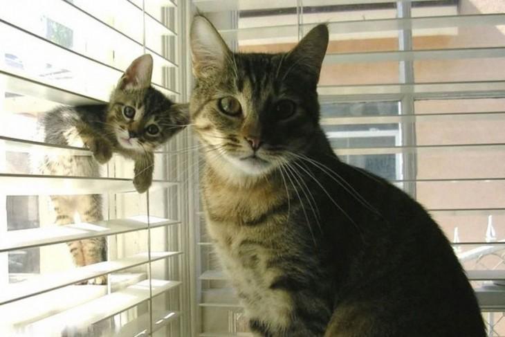 gata con su gatito