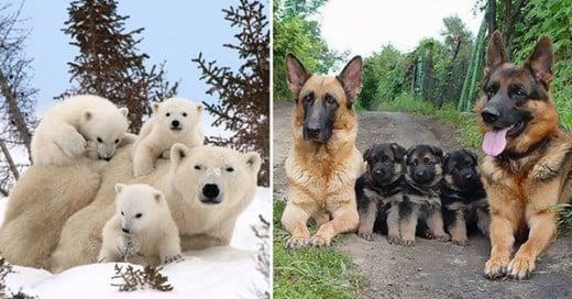 fotos familiares de animales