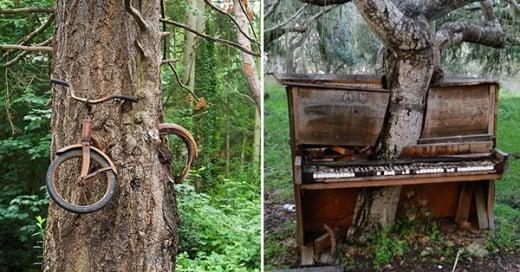 fotos de la naturaleza recuperando lo que es suyo