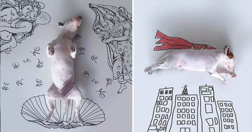 fotos super creativas de su bull terrier