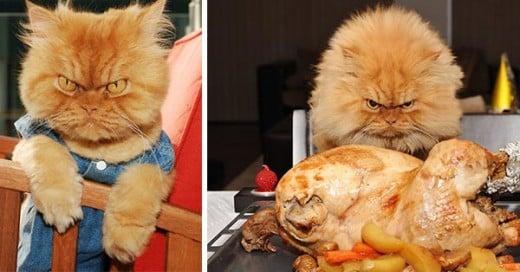 garfi el gato mas enojon del mundo