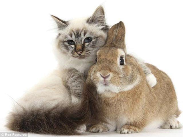 gatito abrazando a un conejo