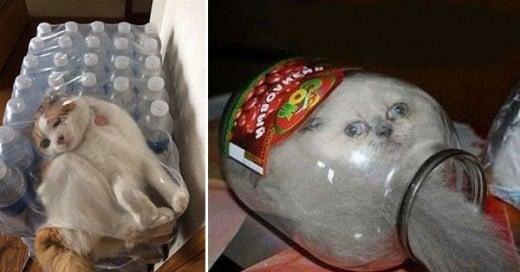 gatos atrapados en lugares extraños