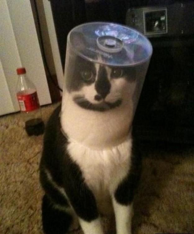gato con un plástico en la caeza