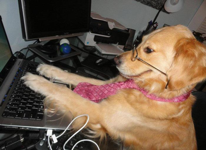 perrita trabajando en la computadora