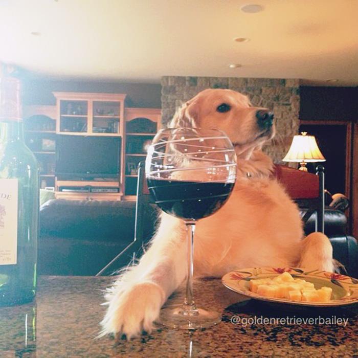 perrita tomando vino