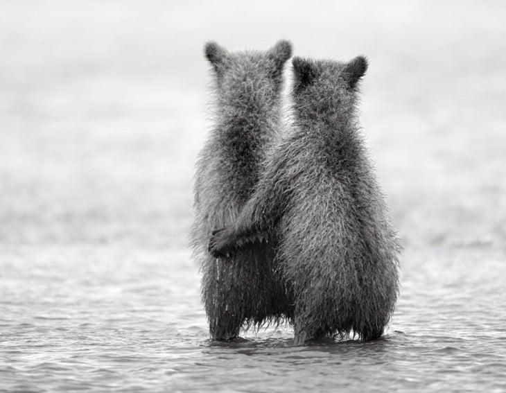 ardillas abrazandose