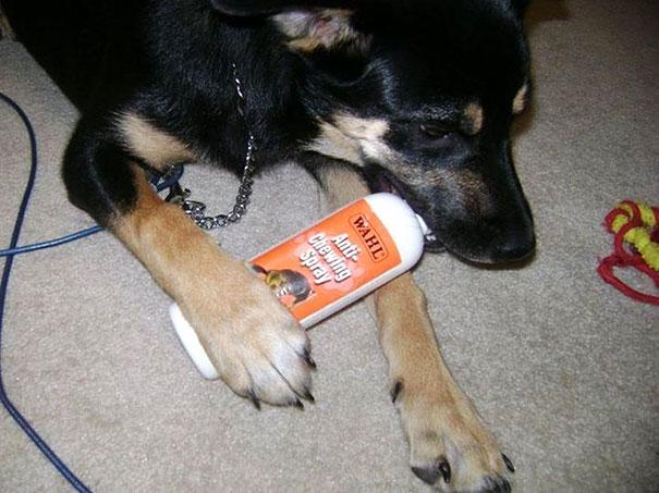 perro mordiendo botella