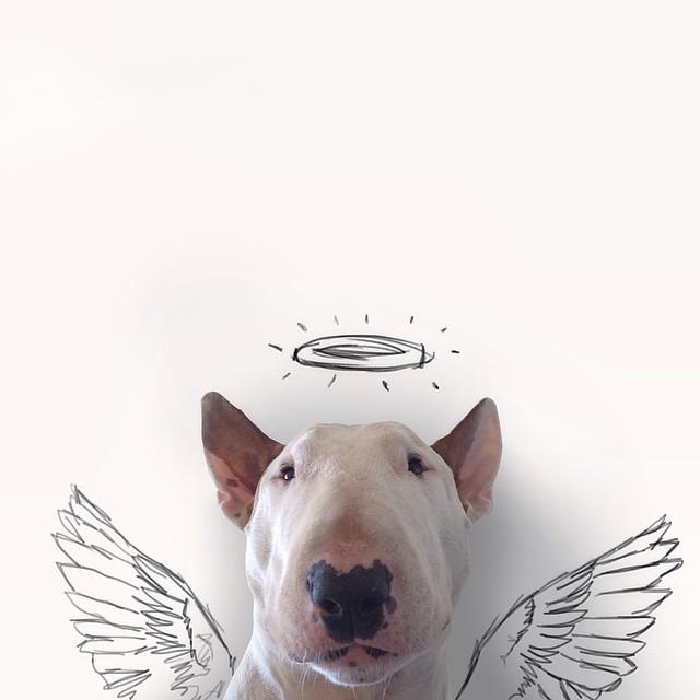 perrito angel