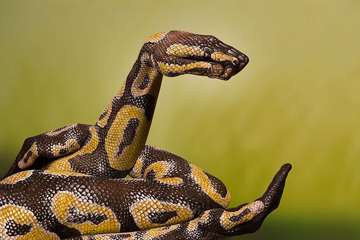bodypaint de de una serpiente