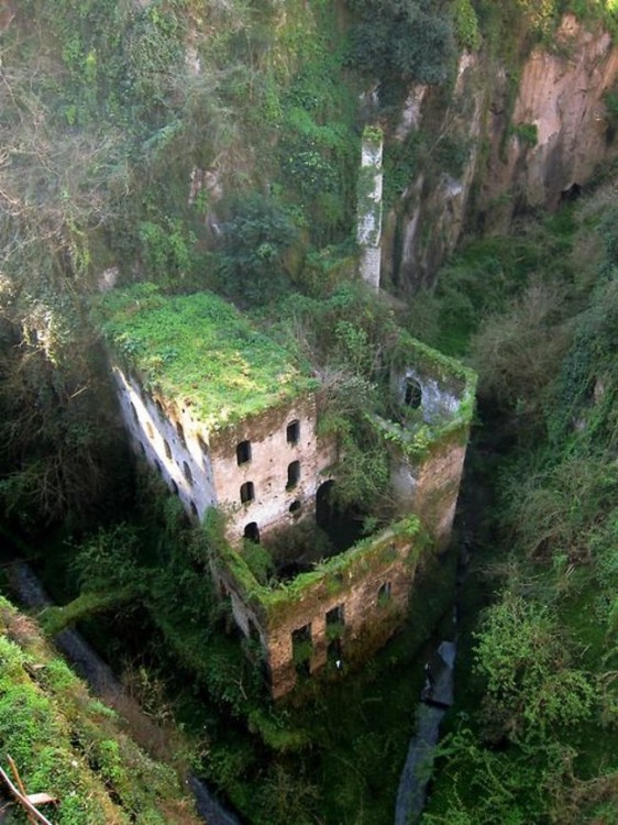 edificio abandonado lleno de plantas