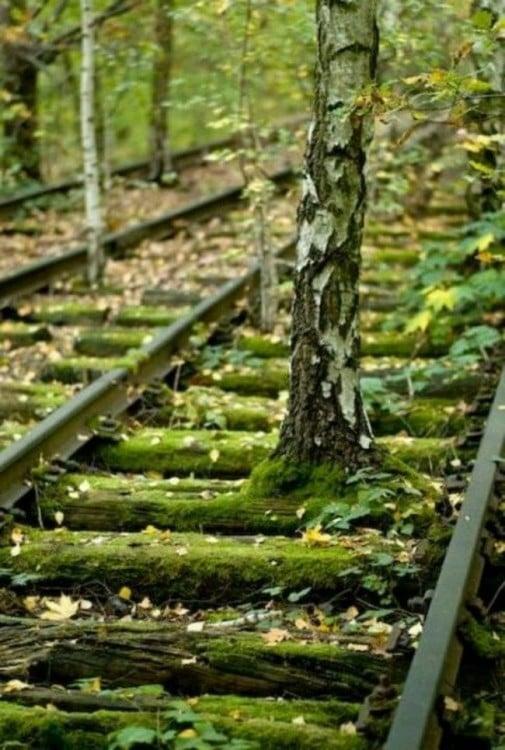 vias de tren con un arbol en el medio