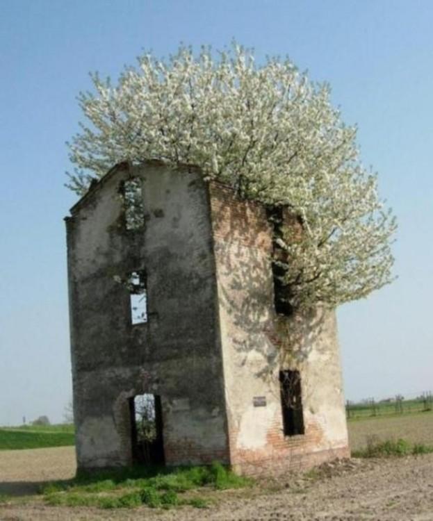 casa retomada por la naturaleza