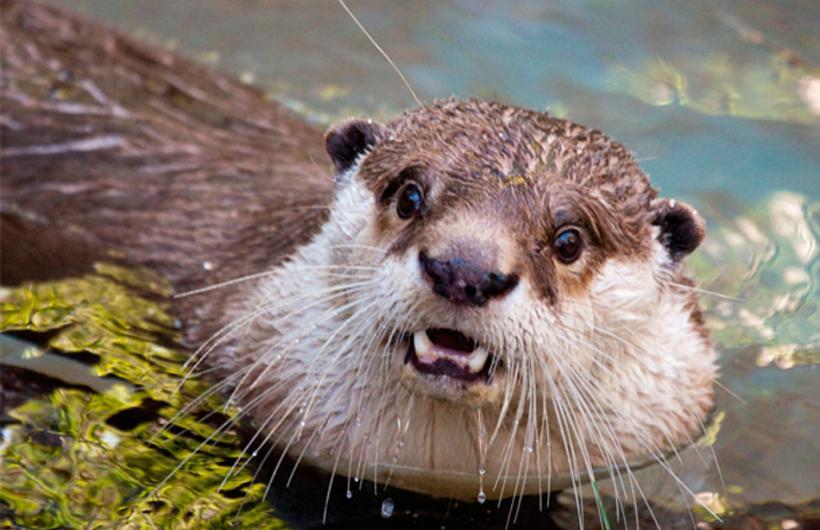Animales que tienen cara de que quedaron sorprendidos