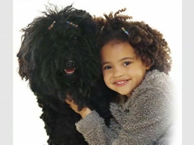 perro negro con cabello chino