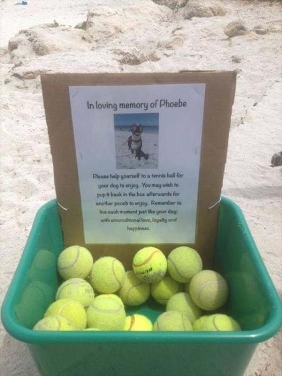 donacion de pelotas para perros