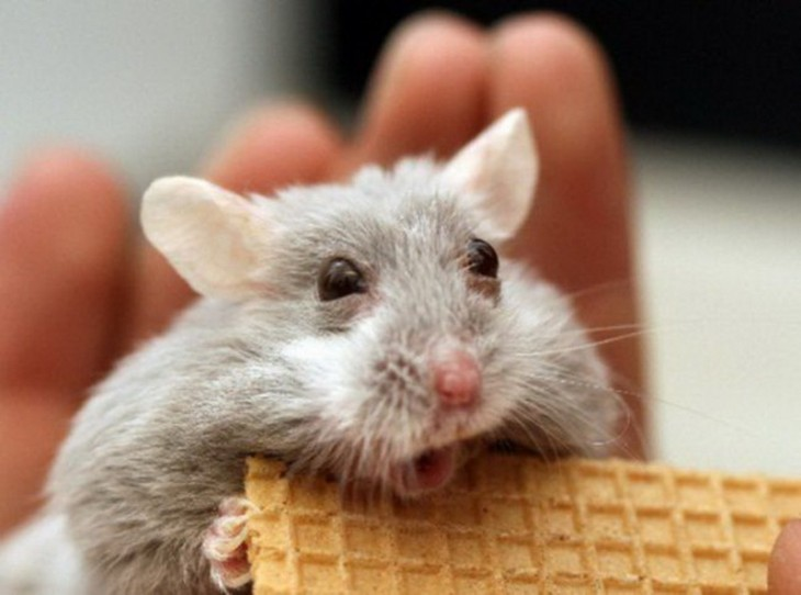 raton con galleta