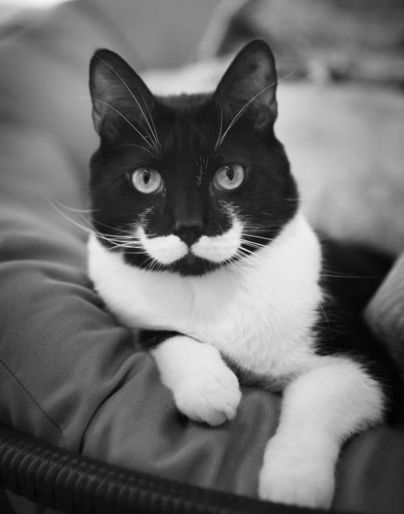 gato con bigotes blancos