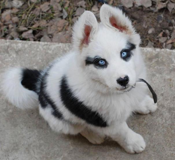 perrito con manchas en los ojos