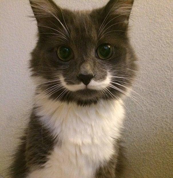 gato cafe con bigotes blancos