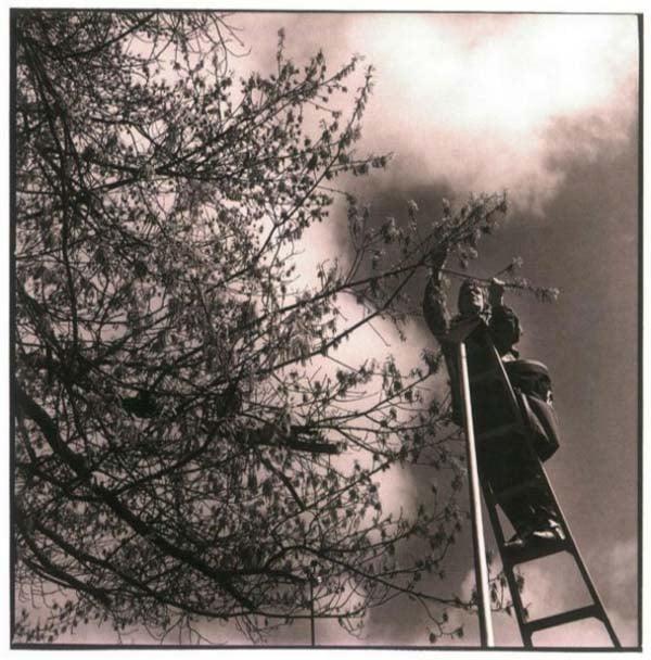 recolector de polen