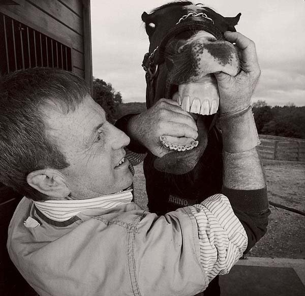 dentista de caballos