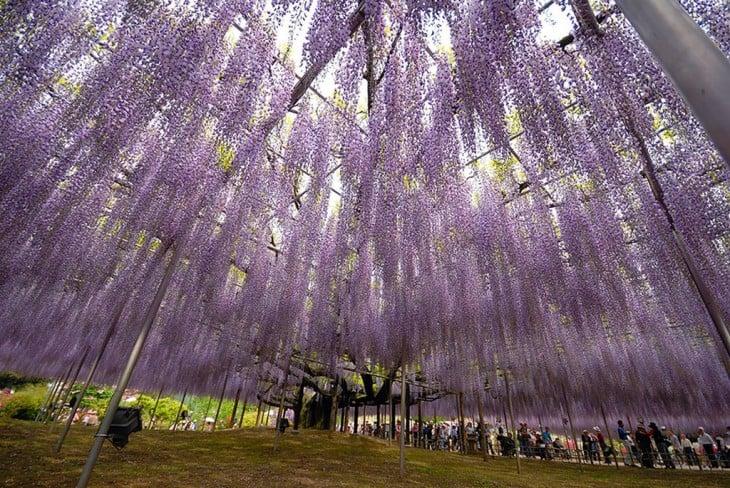 árbol con flores en color lila colgando