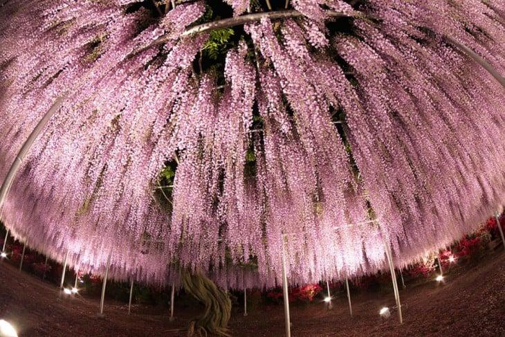 árbol del que cuelgan flores en color rosa