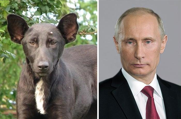 perro con la cara del presidente putin