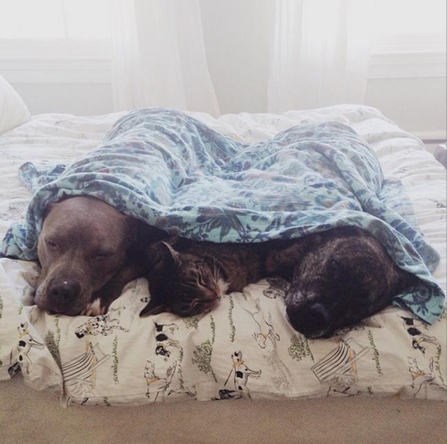 dos perro s acostados con un gao