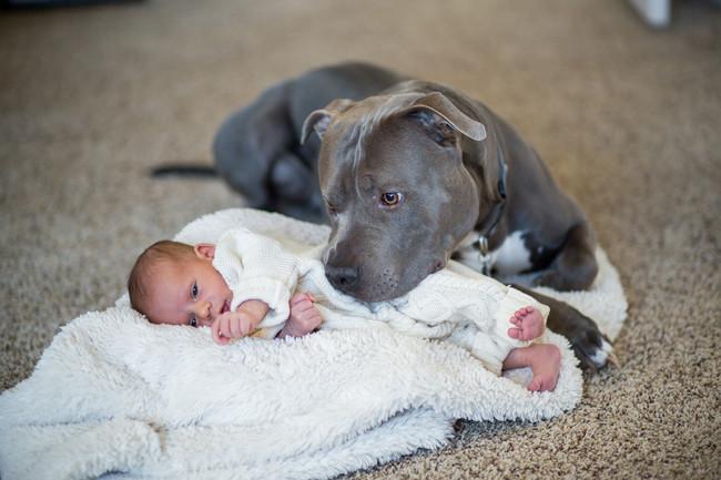 perro acostado cuidando un bebe
