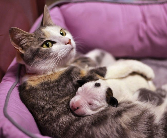 gato abrazando a un cachorro